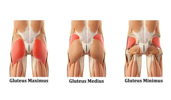 glutes